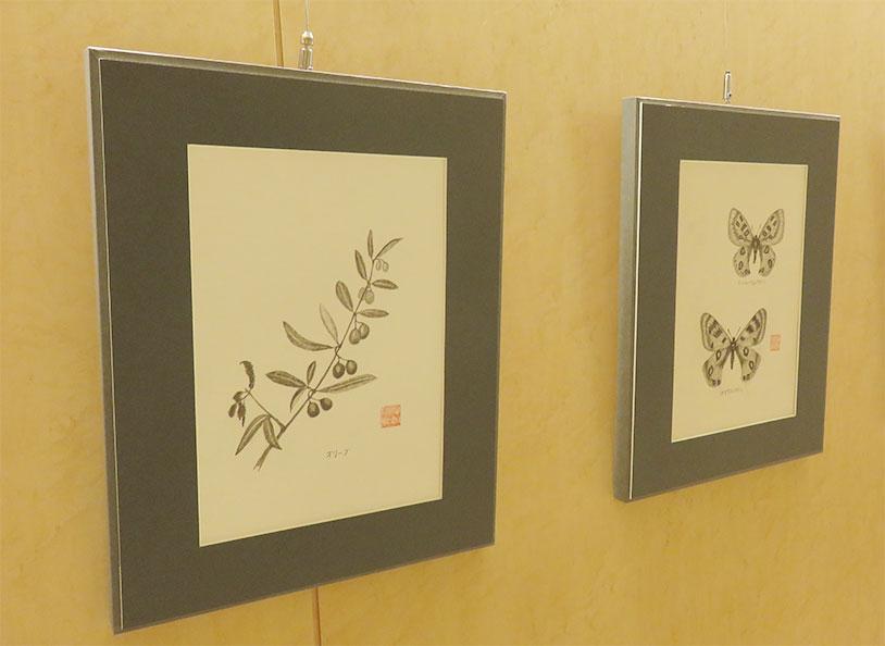 昆虫の鉛筆画作品オリーブ、蝶