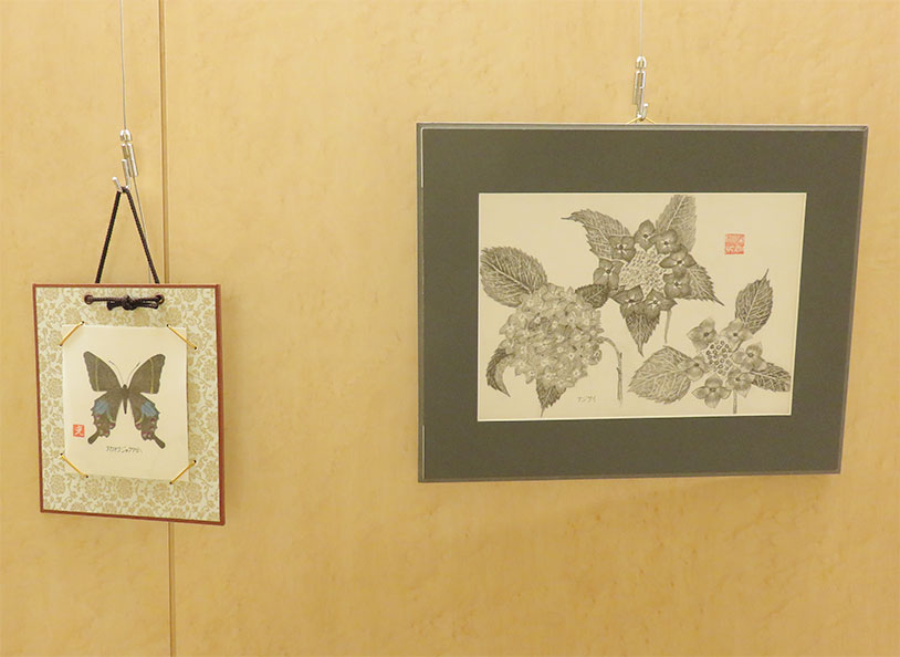 昆虫の鉛筆画作品蝶、紫陽花