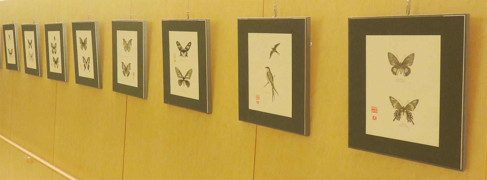 昆虫の鉛筆画作品蝶8点